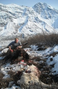 This sow grizzly's aggressiveness was due to the fact we showed up at its kill, a young sheep.