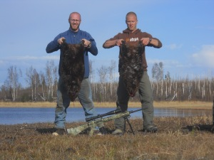 The long range Remington cracks down on a couple nice beaver!